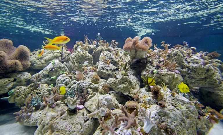Welt der Korallen lockt ins SEA LIFE Speyer